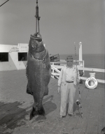 San Clemente Sport Fishers: man standing next to a black sea bass, 1946