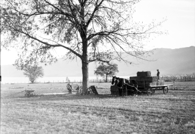 Farmer loading hay onto wagon