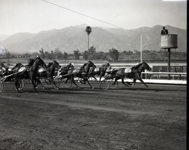 Santa Anita Racetrack. Harness race at finish line. No names on animals or drivers. (April 18)