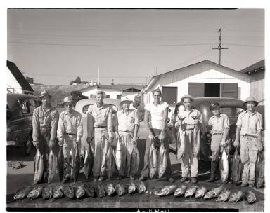 A group of fishermen displaying their albacore catch.