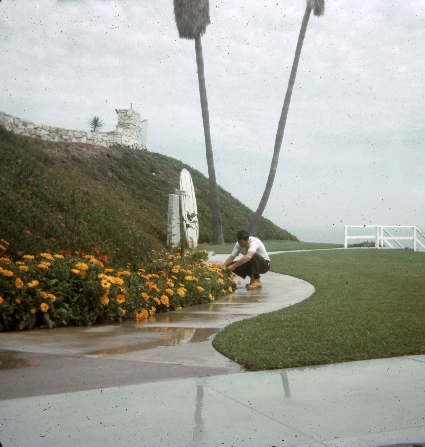 A man tending to a flowerbed at the Dana Strand Club.  In the background a surfboard is propped up against a show near stairs leading to the beach.